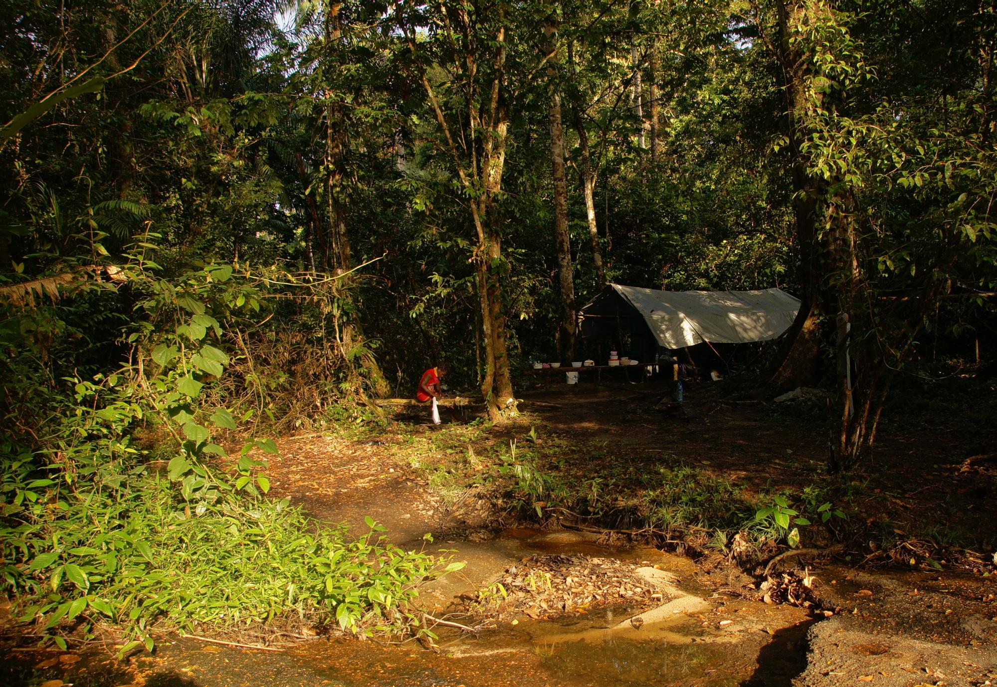Jungle Camp 2012